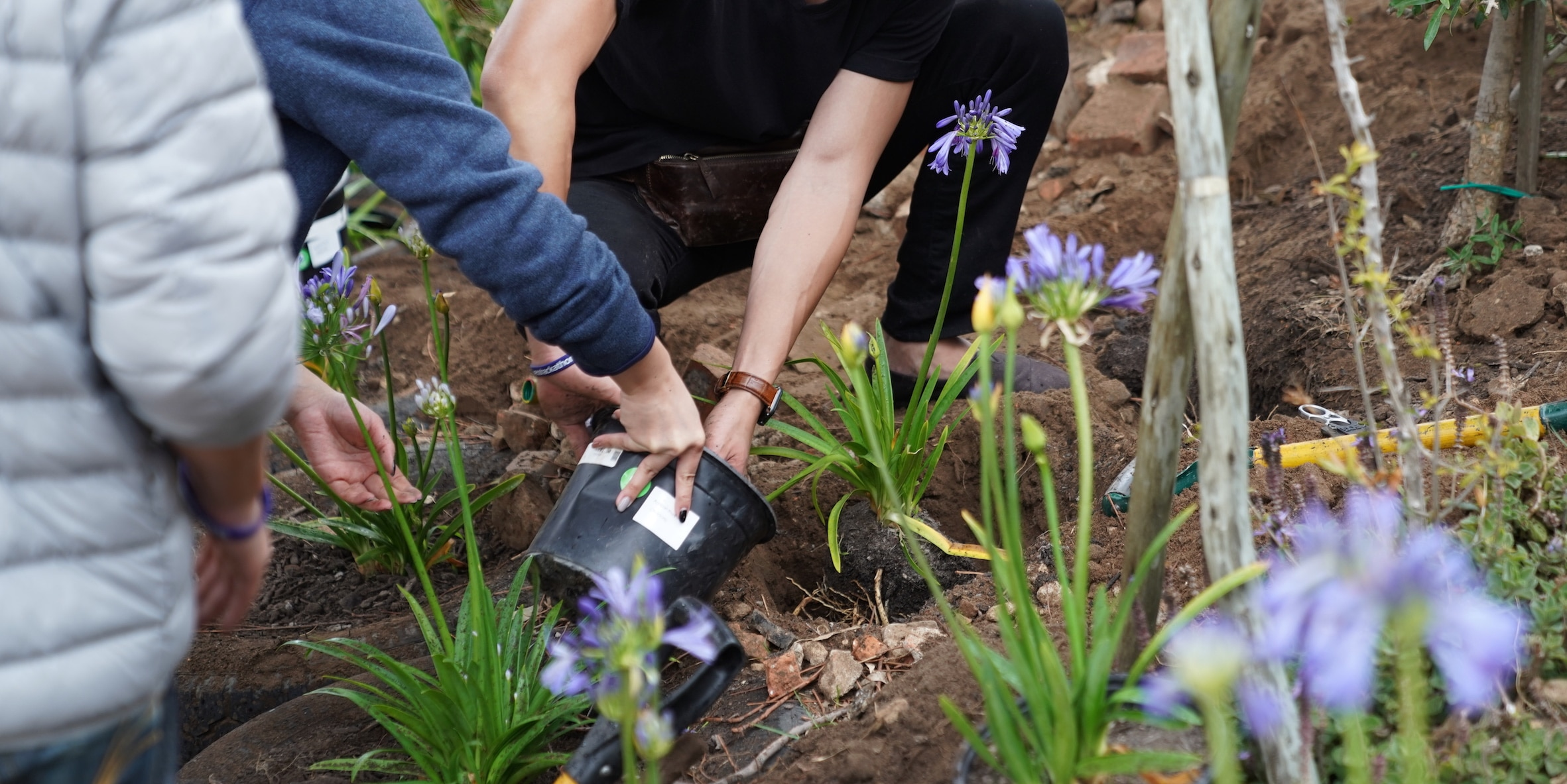 Three individuals planting flowers in a garden.